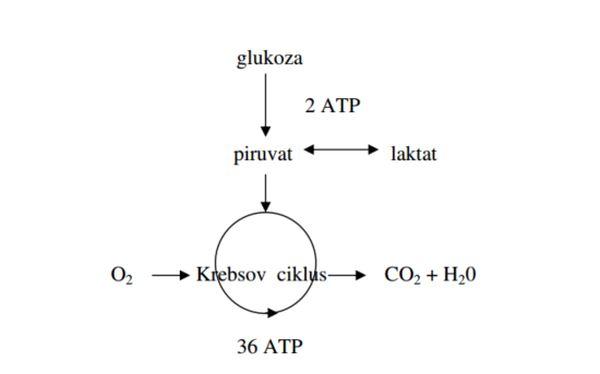 glikoliza proces anaboliczny