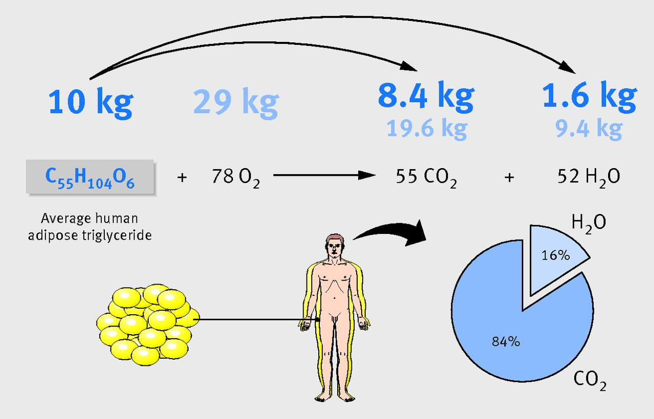Kako izgubiti tjelesnu masnoću nakon 50