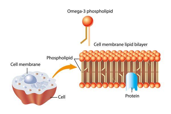 razgrađuju masne stanice dijetalne tablete slim trim u