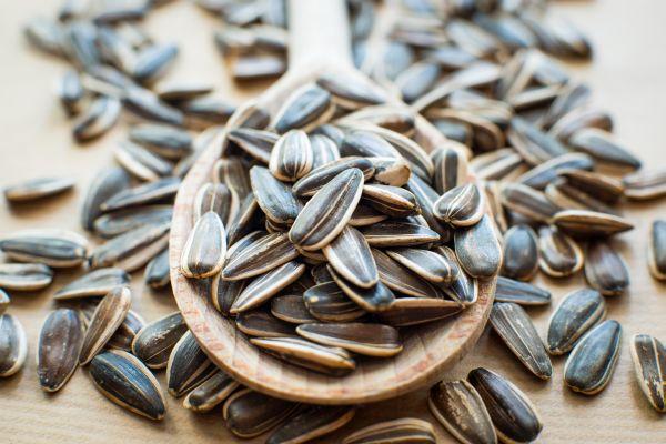 Suncokretove sjemenke nutritivna vrijednost i prednosti for Inmobiliaria mangana