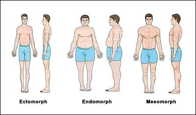súlyvesztés a mezo-endomorf esetében